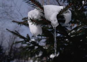 2011 冬号 表紙